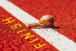 Snail crosses the finish line alone as winner. The concept of competition, the winner, the slow movement, slowly but confidently go to the goal.