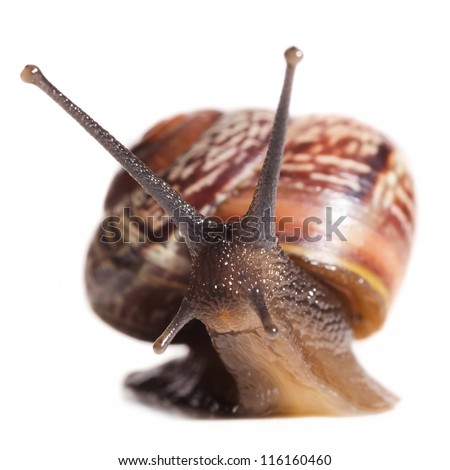 snail cut out from white background
