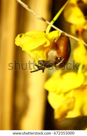 Snail eating orchid flower , cycle of nature #672355000