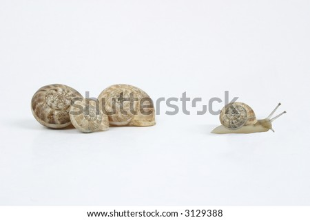 Snail Family, three of them are hidden inside the shells, and the fourth (smallest) walking away.