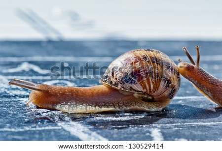 snail finish encouraged by its congener crosses the finish line