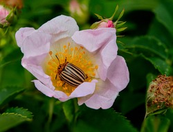 snail fly spider insect ant bee bumblebee plant bush flower poppy nature field bud bumblebee wasp worm bug aphid caterpillar butterfly butterfly the blacksmith locust
