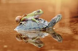 snail, frog, turtle, dumpy frog, tree frog,