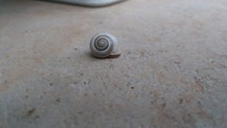 snail grey stone animal insect