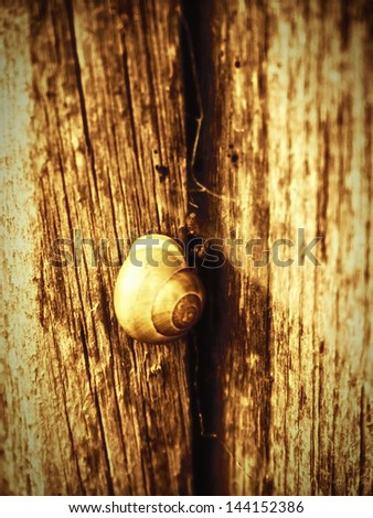 snail house on wooden wall 3, experimental