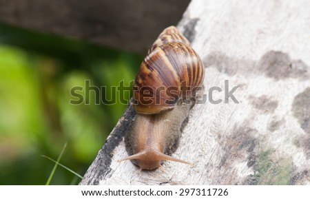 Snail in timber. Slow life.