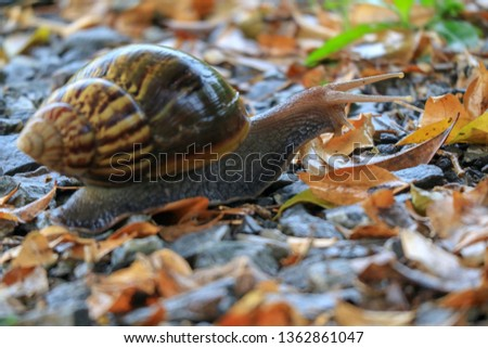 Snail, invertebrate animal It crawled on the ground. #1362861047