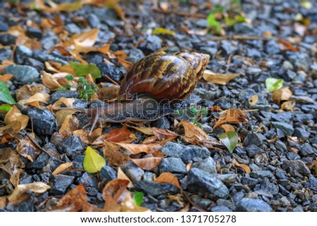 Snail, invertebrate animal It crawled on the ground. #1371705278