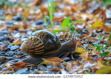 Snail, invertebrate animal It crawled on the ground. #1374971957