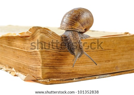 snail is moving along the old book