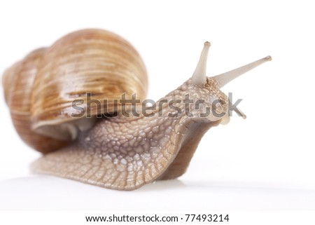 Snail - Isolated on white backgrounds
