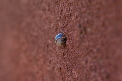 Snail, Land snail, terrestrial pulmonate gastropod molluscs climbing on the cement wall with copy space. Soft focus.