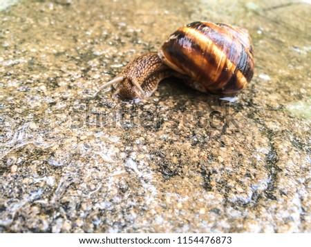 snail large shellfish for dizayna background wallpaper  #1154476873