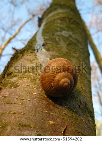 snail leaves of the tree to the ground
