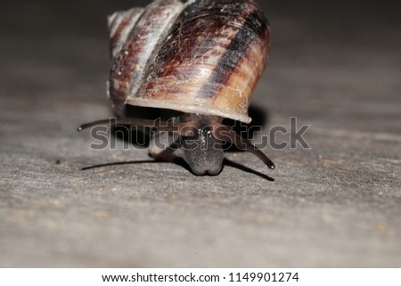 Snail life animal with beauty shell crawling find some food on the wood #1149901274