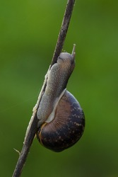 Snail Macro Closeup Nature Gastropoda Nature