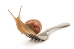 Snail on a fork sitting isolated on a white background
