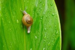 Snail on a leaf .