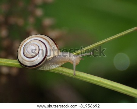 Snail on branches with green background, molluscs