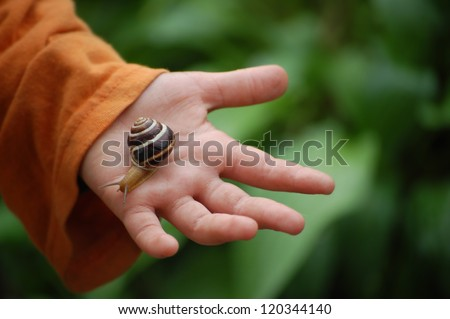 Snail on child hand on green background