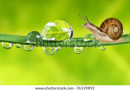 snail on dewy grass