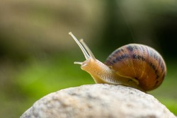 snail on rock reaching up
