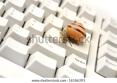 Snail on the computer keyboard. Concept of slow working computer.
