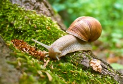 Snail on the old tree trunk.