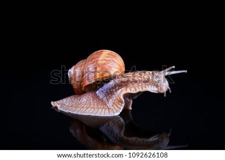 snail portrait macro