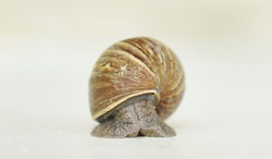 Snail Portraiture. This snail is actually upright against a wall. The auction power can be up to 4.4 N