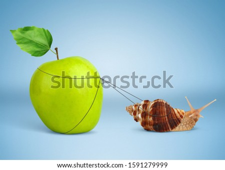 Snail pulling heavy apple, insistence concept Stock photo ©