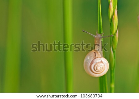Snail  resting on green leaves