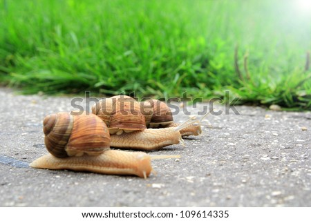 snail run - stock photo