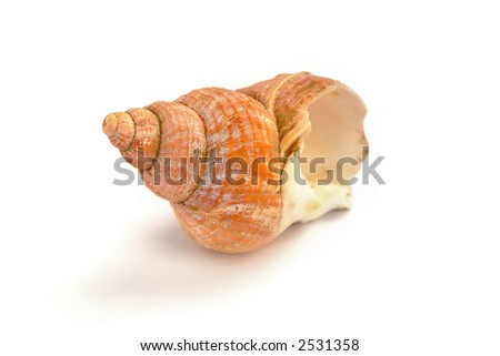 snail-shell isolated on white