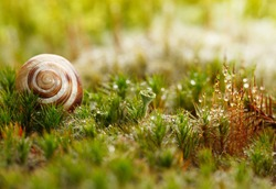 Snail shell on red and green moss. Macro, low point of view