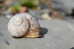 snail shell on the rock