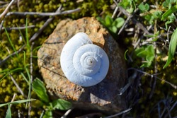 snail shell on the rock in the meadow