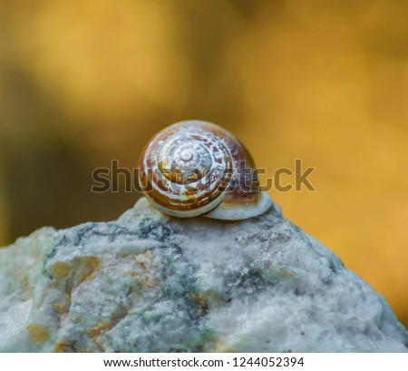 Snail Shell on top of white rock and nice soft yellow, brown background. Snail shell closeup photo. Close-up of Snail shell on a light background.