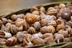 Snail shells in the basket close up. Snail farm. Snails close up
