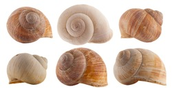 snail shells isolated on white background