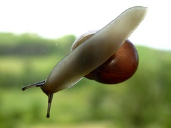 Snail slithering across a window, countryside in the background