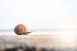 Snail tring slide moving forward.