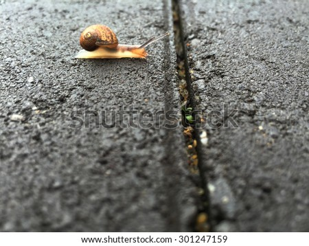 Snail waiting and thinking before attempting to cross  over a gap in the paving