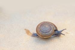 snail walking on white foam texture. Snail is reptile animal race in beside view
