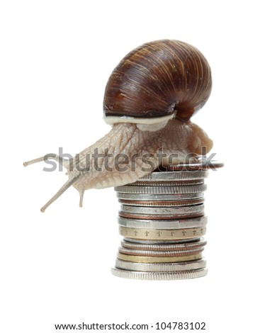 snail with coins