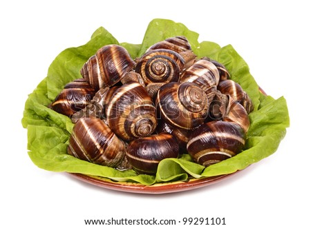 snails as gourmet food green leaf  isolated white background
