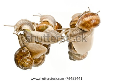Snails climbing isolated on white