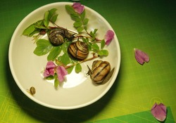 Snails crawling on plates.Photo shoot with gastropods, snails.