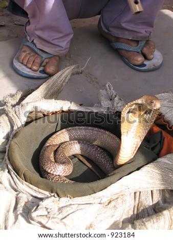 Snake charmer and snake in New Delhi, India.