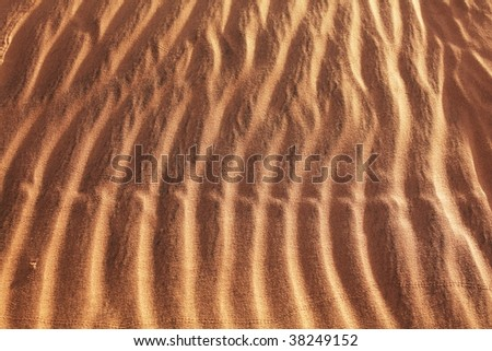snake footprints on sand